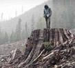 Ako i jedno stablo padne: Priča o Frontu za oslobođenje Zemlje